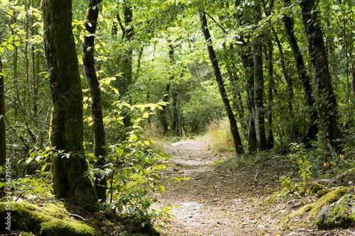 Foto op Canvas Weg in bos Sentier de randonée