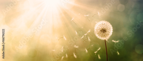 Aluminium Paardebloemen Schöne Pusteblume