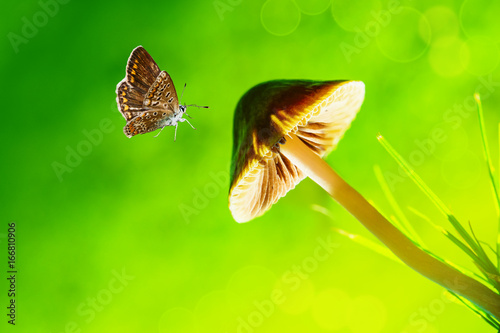 Poster Lime groen Summer landscape. Brown butterfly flies to the pileus, artistic image, closeup macro