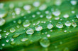 Quadro droplet water on leave background