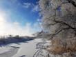 Winter Hoarfrost Tree