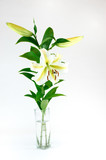 fresh lily in the glass vase isolated on white background