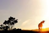 Krajobraz słońca Safari