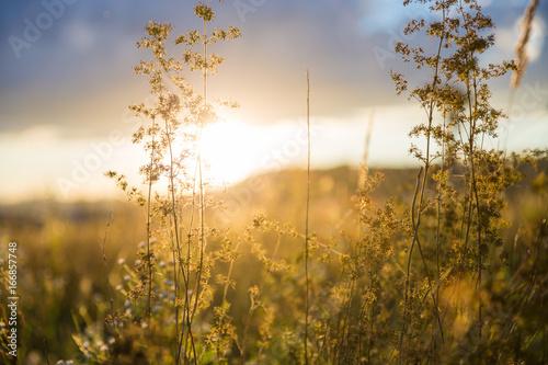 Natur - 166857748