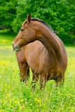 Koń na zachodnim wybrzeżu Szwecji