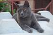Quadro portrait de chat gris sur un bloc de béton dans la rue