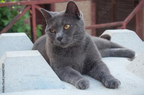 portrait de chat gris sur un bloc de béton dans la rue