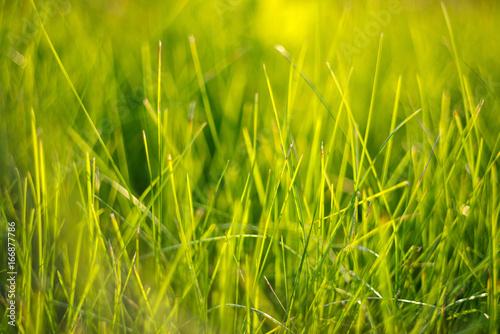 Close up grass.