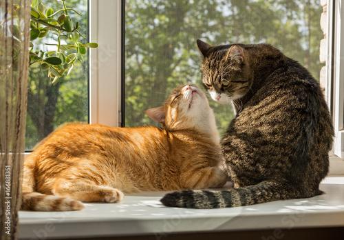 Two beautiful cat on the windowsill