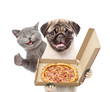 Funny cat and puppy with open pizza boxes. isolated on white background