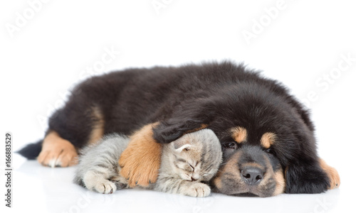 Dog hugging a sleeping kitten. isolated on white background
