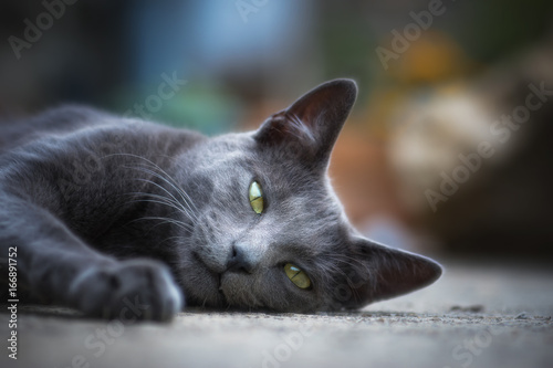 Chat en plein air - outdoor cat