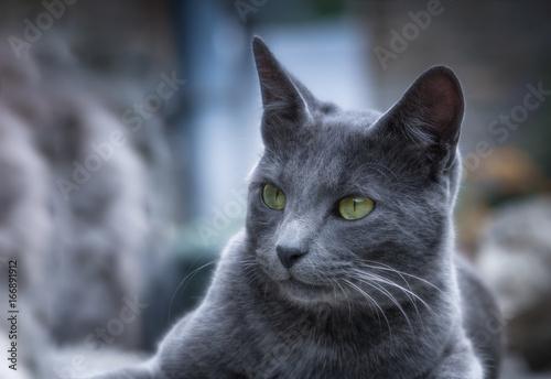 Chat en plein air - outdoor cat Poster