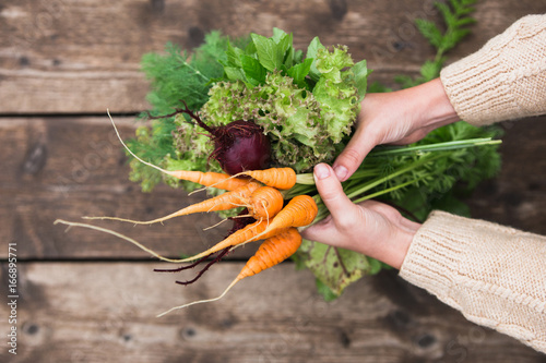 In the hands of fresh carrots, beets, parsley, dill and mint. Close-up of female hands with vegetables.