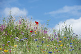 Beautiful vibrant landscape image of wildflower meadow in Summer - 166904388