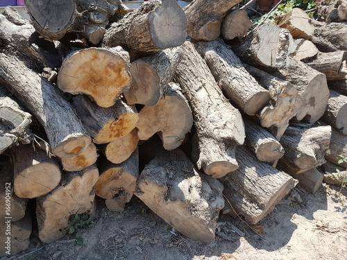 Pile of dry tree logs. Tree trunks for fireplace