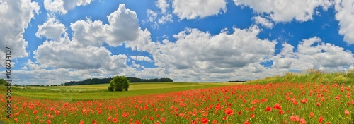 Foto op Canvas Klaprozen Poppy field panorama