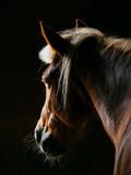 Stajnie konia
