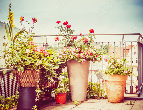 Poster Various flowers patio pots and planter on  terrace or balcony , urban garden