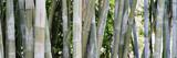 Bambus als Hintergrund
