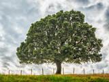 Tło przyrody z drzewa i trawy