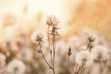 Delicate fluffy dandelion flowers in the light of the setting sun And a snail on the branches. Natural yellow background. Soft gentle photo. Soft focus.  - 166975382