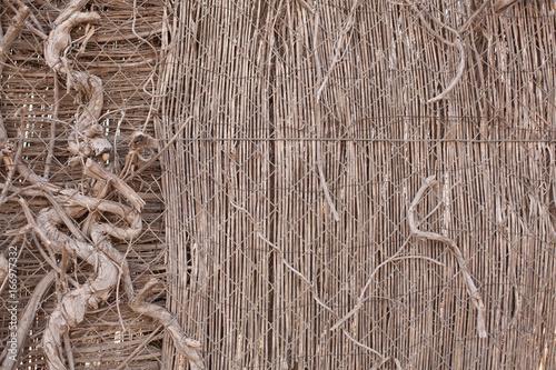 Fotobehang Koffiebonen muro de madera con ramas de un antiguo árbol.