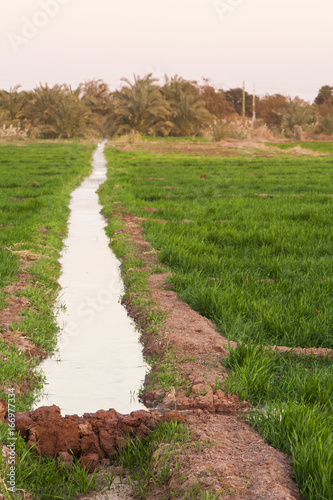 Irrigation channel on the fields at Dahla oasis, Egypt.