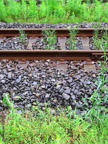 雨に濡れる線路と夏草