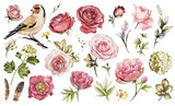 Set watercolor elements of flower rose, peonies, hydrangea, collection garden and wild flowers, leaves, branches, illustration isolated on white background, bird - goldfinch, pink  bud - 167002985