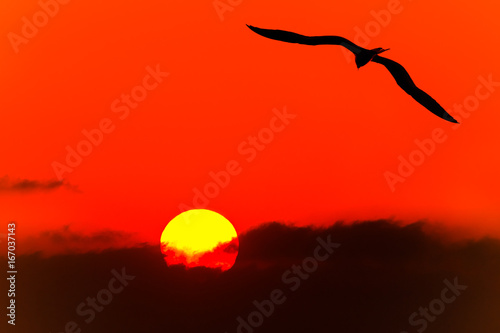 Foto op Canvas Rood Bird Silhouette Flying