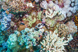 Colorful coral reef at the bottom of the red sea in Egypt.