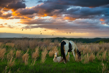 horses and scenic sunset, kentucky