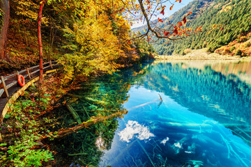 Fantastic view of lake with azure water among fall woods