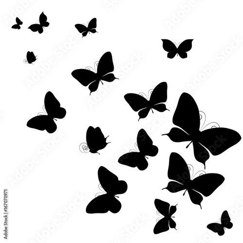 black butterfly, isolated on a white