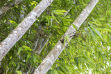 Bamboo tree in tropical garden, outdoor day light