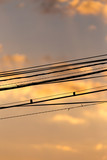 Electric wires at sunset as an background