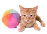 Kotek w studio