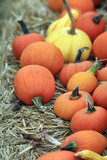 Fair of a pumpkins in California - 167144716