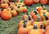 Fair of a pumpkins in California - 167146592