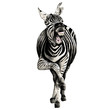 Zebra full height smiling sketch vector graphics color picture