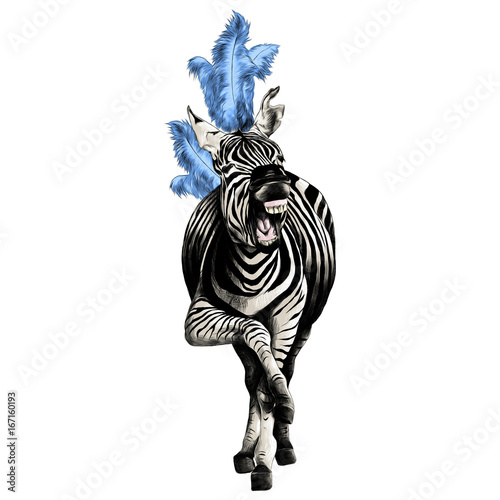 Zebra full height smiling with feathers on his head acts in the circus sketch vector graphics color picture - 167160193