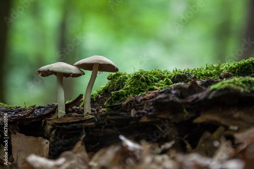 Aluminium Betoverde Bos Pilze im Wald