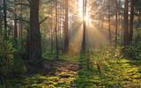 Charakter lasów słoneczny