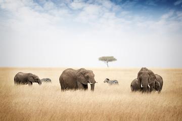 Elephants Grazing in Kenya Africa
