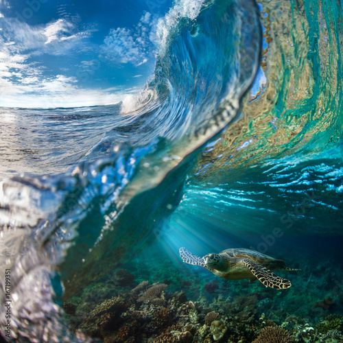 Sea turtle under ocean wave