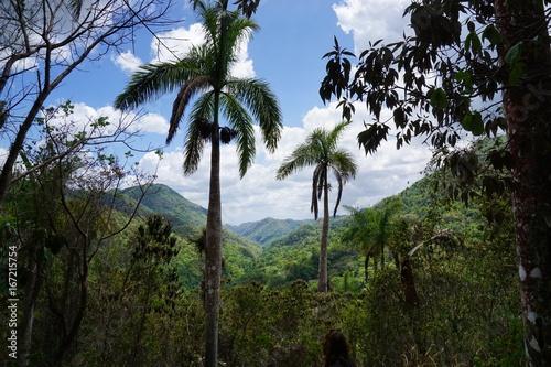 im Regenwald auf Kuba bei Trinidad, Karibik Poster