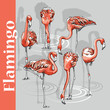 Set of a pink Flamingo. Vector illustration. - 167226168