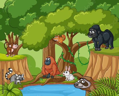 Many wild animals in forest
