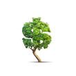 Quadro tree